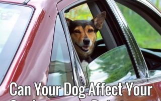 Can Your Dog Affect Your Car Insurance Rate